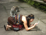 monkey-and-tourist